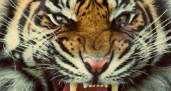 عکس حیوانات زیبای جهان + عکس های جانوران جدید ناب (۱۰)