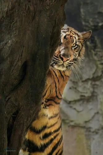 عکس های زیبا از حیوانات برای پروفایل جدید