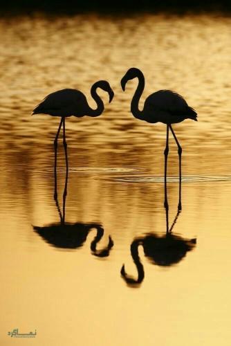 عکس زیبای حیوانات برای پروفایل جدید