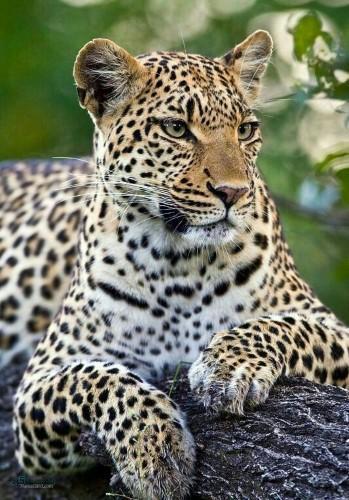 عکس های حیوانات زیبا پروفایل جذاب