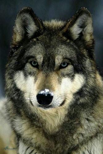 عکس حیوانات زیبای متفاوت