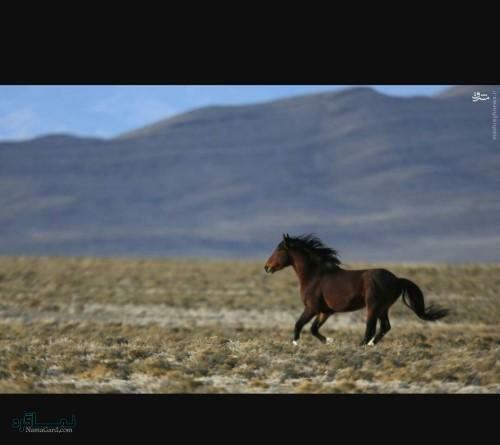 دانلود عکس های حیوانات زیبای خاص