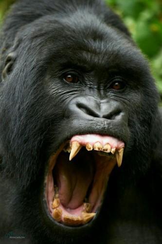 عکس زیبای حیوانات برای پروفایل خاص
