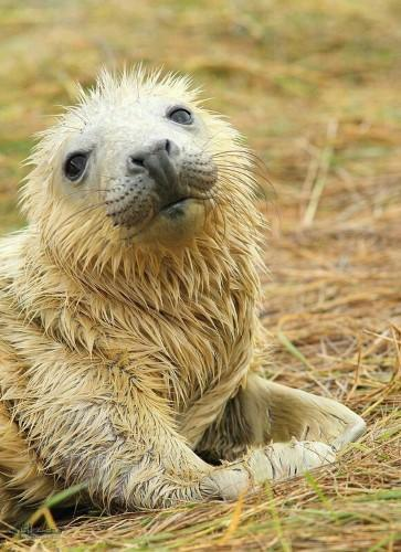 تصاویر های حیوانات زیبای پروفایل متفاوت