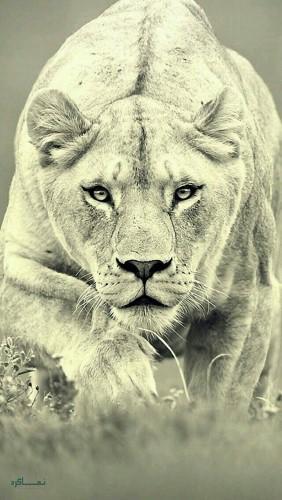 عکس های حیوانات زیبا پروفایل متفاوت