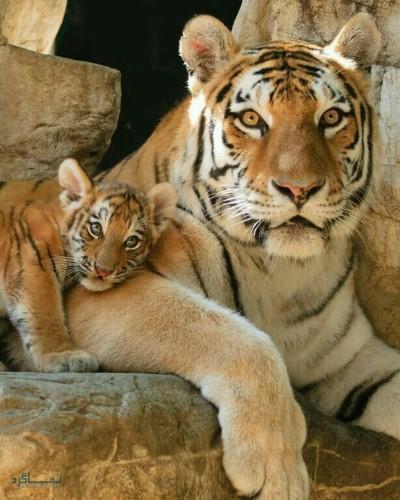 عکس های حیوانات زیبا برای پروفایل خاص
