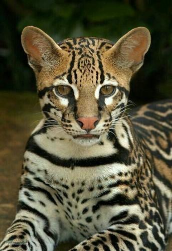 عکس زیبا از حیوانات برای پروفایل جذاب
