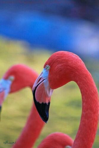 عکس حیوانات برای پروفایل متفاوت