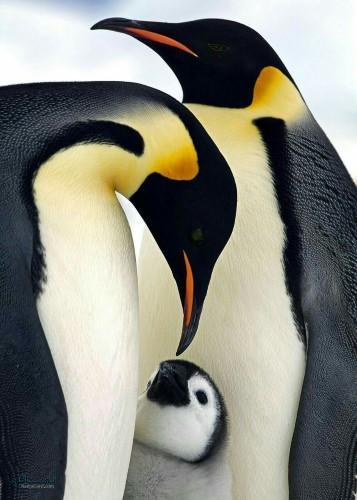 عکس های زیبای حیوانات برای پروفایل متفاوت