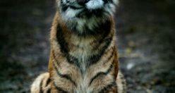 عکس حیوانات زیبا جهان + عکس های جانوران جدید ناب (۱۱)