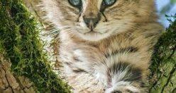 عکس زیبا حیوانات برای پروفایل + عکس های جانوران جدید ناب ۲۰۲۱