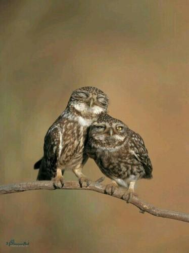 عکس های زیبا از حیوانات برای پروفایل خاص