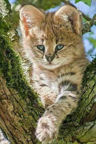 عکس های زیبا حیوانات برای پروفایل خاص