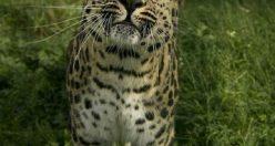 عکس زیبای حیوانات برای پروفایل + عکس های جانوران جدید ناب (۲)