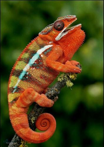 عکس های حیوانات زیبای متفاوت