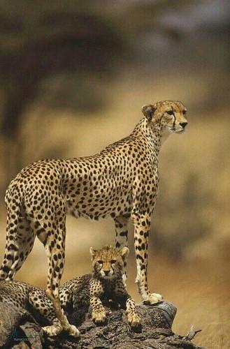عکس های حیوانات زیبای جهان متفاوت