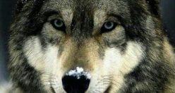 عکس از حیوانات زیبای جهان + عکس های جانوران جدید ناب (۱۳)