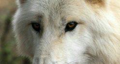 عکس حیوان زیبا برای پروفایل + عکس های جانوران جدید ناب (۴)
