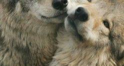 عکس زیبا از حیوانات برای پروفایل + عکس های جانوران جدید ناب (۵)