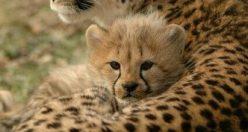 عکس حیوانات زیبا برا پروفایل + عکس های جانوران جدید ناب (۹)