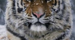 عکس حیوان زیبا برا پروفایل + عکس های جانوران جدید ناب (۱۵)