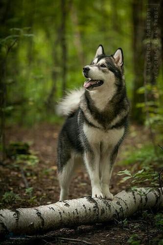 عکس حیوانات زیبا برا پروفایل