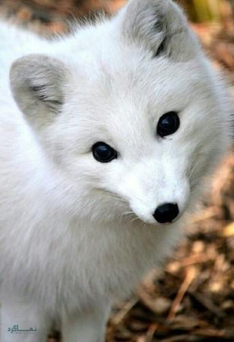 عکس های زیبا از حیوانات برای پروفایل