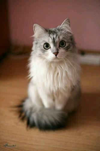 عکس حیوانات زیبای جهان
