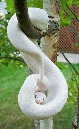 عکس حیوان زیبا برا پروفایل
