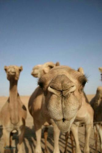 عکس حیوان زیبا برای پروفایل