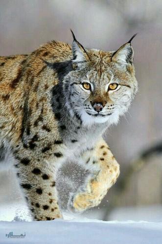 دانلود عکس حیوانات زیبای جهان