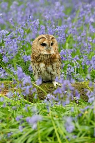تصاویر حیوانات زیبا برای پروفایل