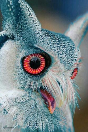 عکس زیبا حیوانات برای پروفایل