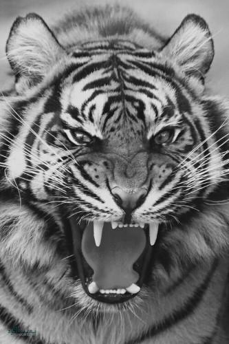 عکسهای زیبای حیوانات برای پروفایل