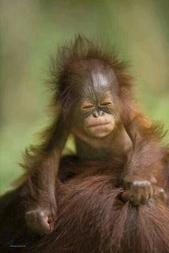 عکس حیوانات زیبا و بامزه برای پروفایل