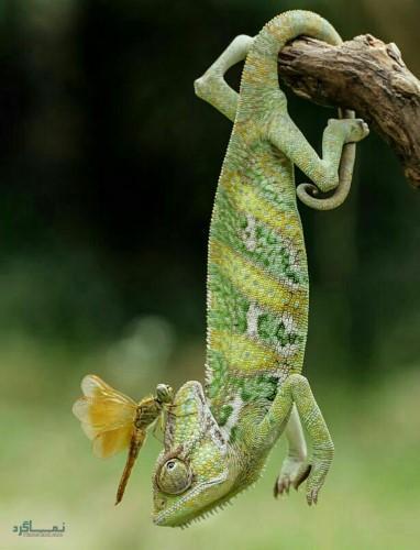 عکس حیوانات زیبای دنیا