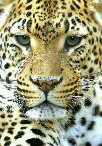 عکس از حیوانات زیبای جهان