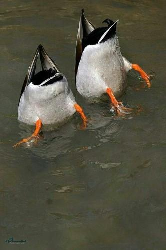 عکس زیبا از حیوانات برای پروفایل