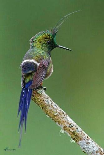 عکس حیوانات زیبا جهان