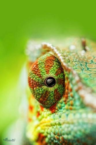 عکس زیبای حیوانات برای پروفایل
