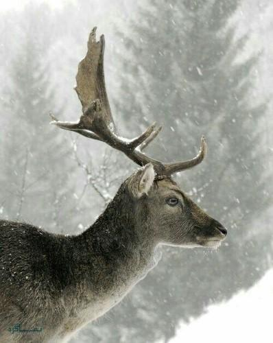 عکس های پروفایل حیوانات وحشی جذاب