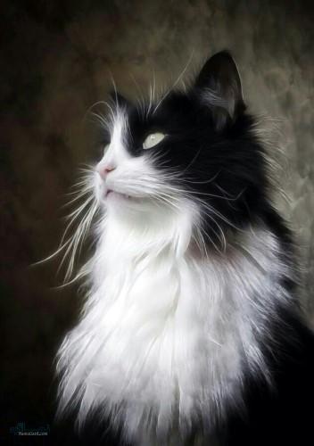 عکس های پروفایل حیوانات شیک