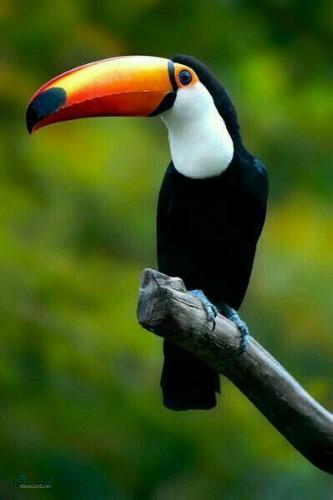 عکس های پروفایل حیوانات بامزه زیبا