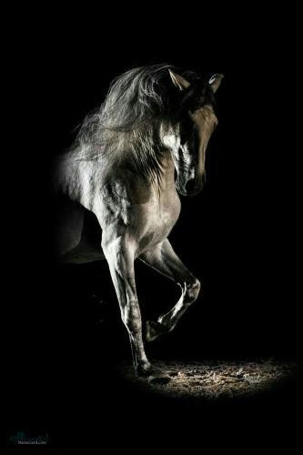 عکس های پروفایل حیوانات وحشی زیبا