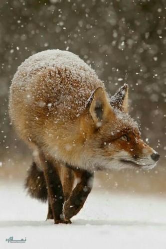 عکس های پروفایل حیوانات جذاب