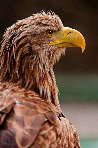 عکس های پروفایل حیوانات جدید