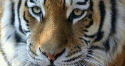 عکس پروفایل حیوانات زیبا + عکس های جذاب ناب حیوانات (۲)