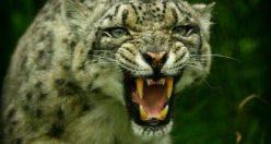 عکس پروفایل حیوانات با متن + عکس های جذاب ناب حیوانات (۸)