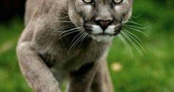عکس پروفایل حیوانات ناز + عکس های جذاب ناب حیوانات (۹)