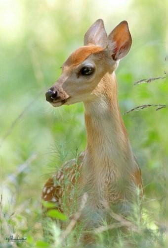 عکس های پروفایل جانوری جدید